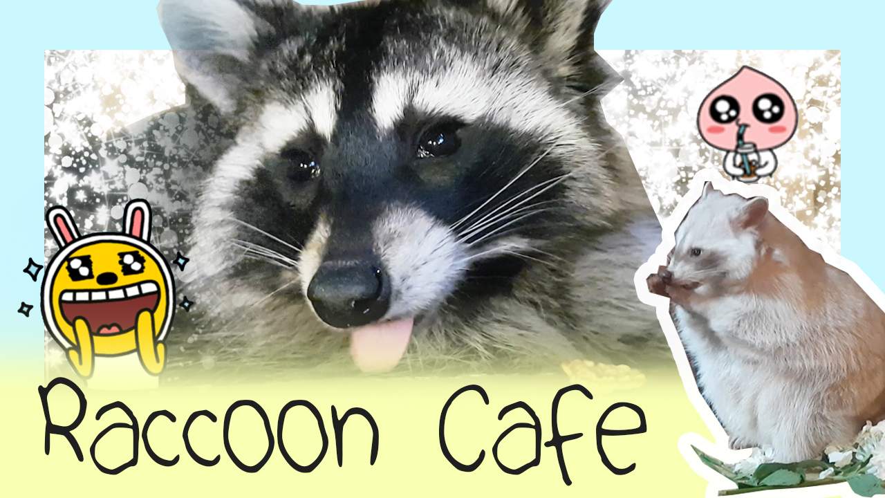 Visiting a Raccoon Cafe in Seoul!