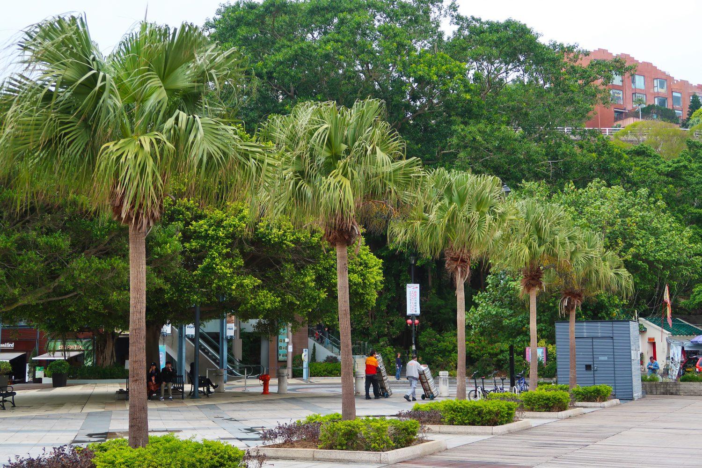 palm-trees-stanley-beach-hong-kong