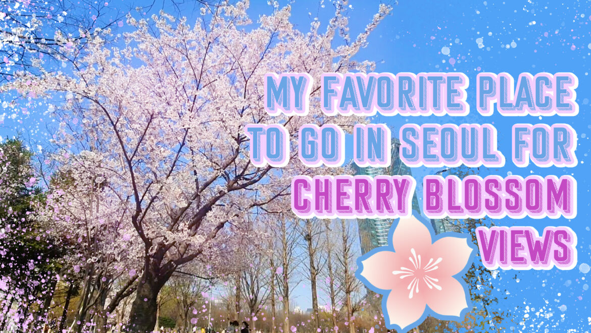 Cherry Blossom in Seoul Forest Park